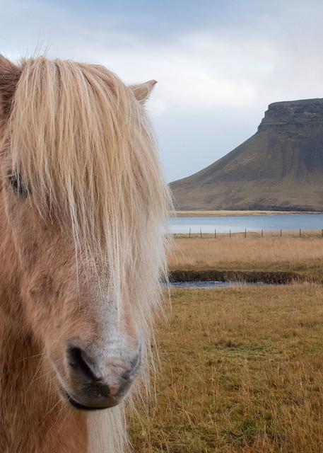 Icelandic Horse Photography Art | Kit Noble Photography