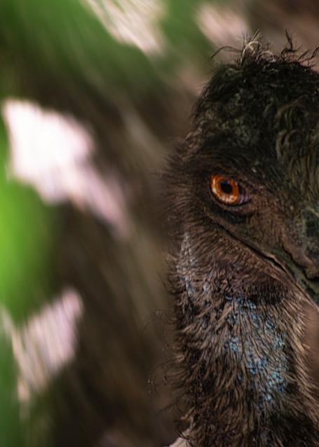 Emu Photography Art | Kathleen Messmer Photography