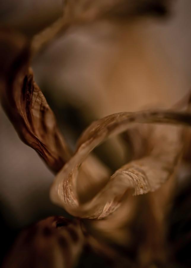Expired Photography Art | Kathleen Messmer Photography