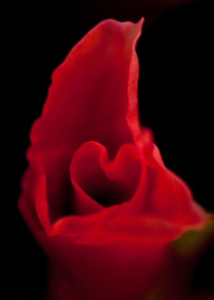 Soft Red Heart Photography Art   Kathleen Messmer Photography