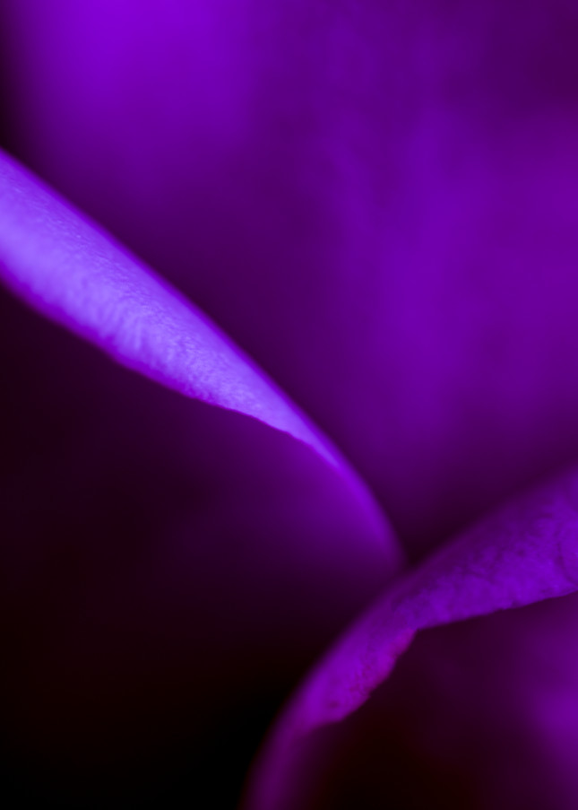 Painted Purple Photography Art   Kathleen Messmer Photography