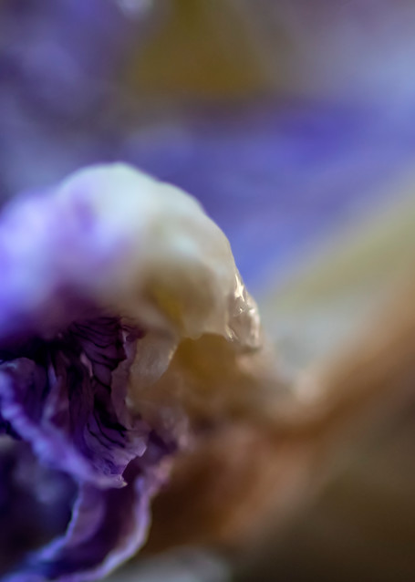 Ice Iris Photography Art | Kathleen Messmer Photography