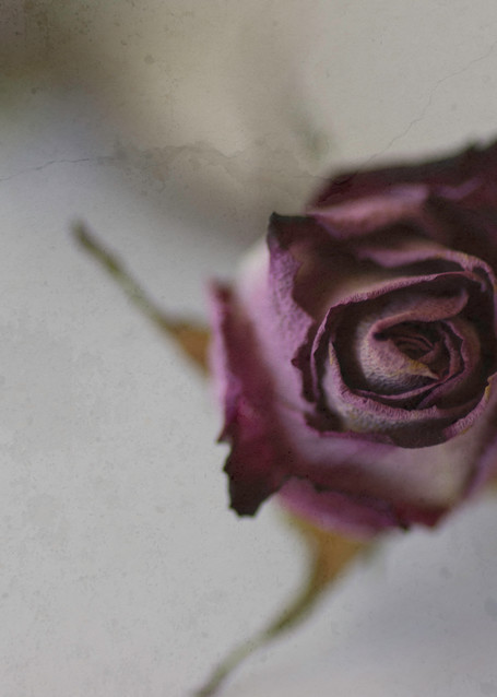 Vintage Rosebud Photography Art | Kathleen Messmer Photography