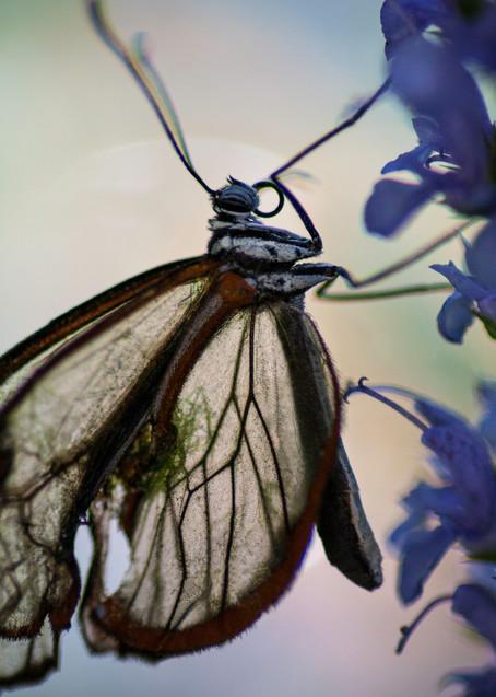 Glasswing Photography Art   Kathleen Messmer Photography