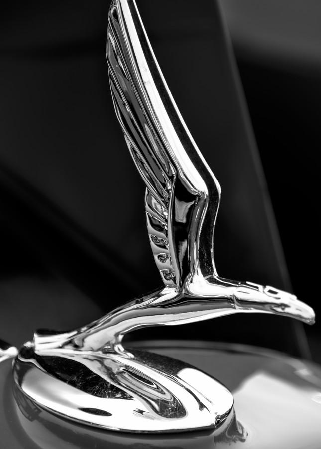 Bird Hood Ornament 2 Photography Art | Kathleen Messmer Photography