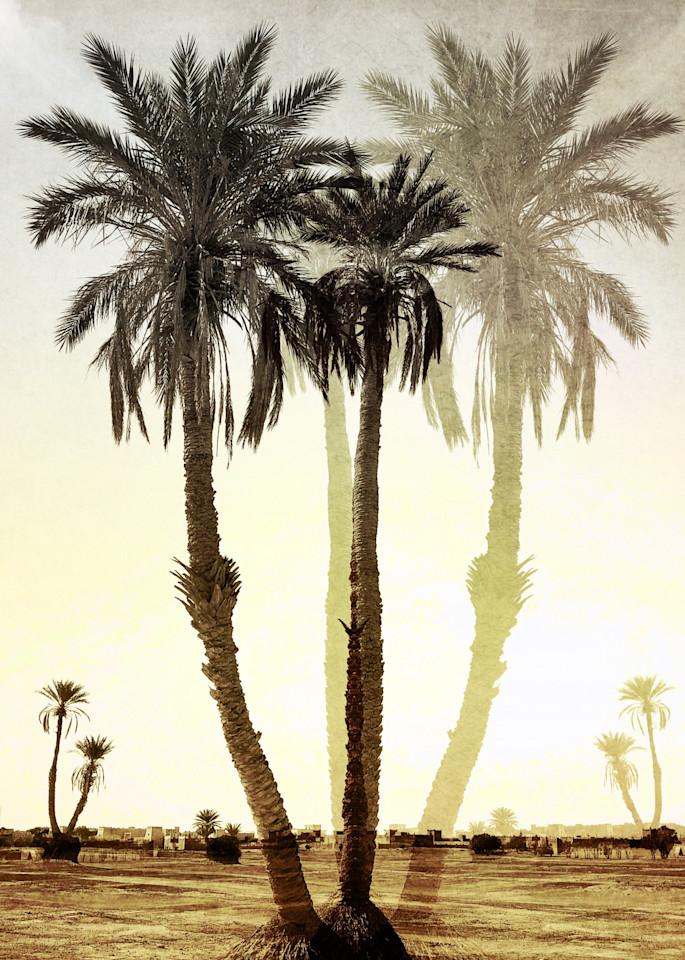 Imagining Palms Art | photographicsart
