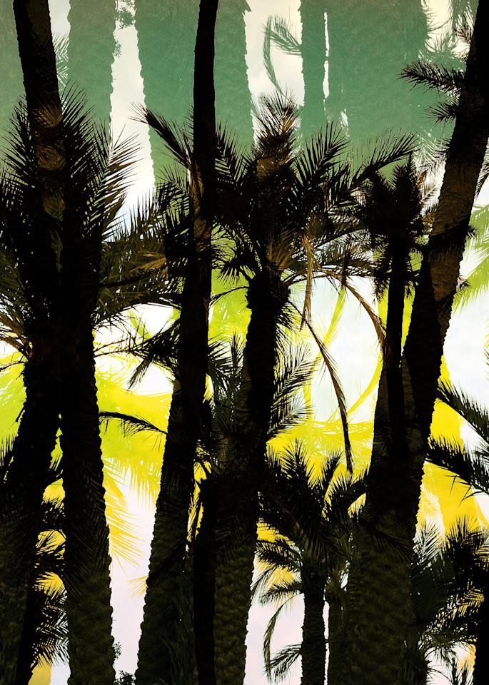 Palm Oasis Art | photographicsart