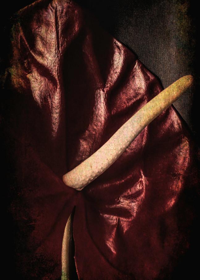Dark Anthurium Photography Art | Kathleen Messmer Photography