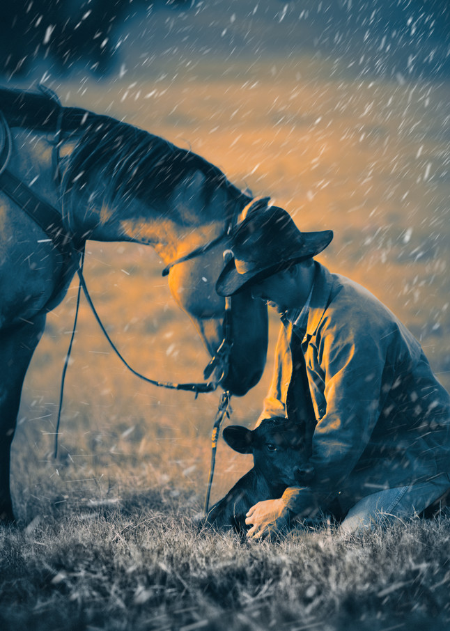 Cowboy and Stray Calf, Winter in Texas