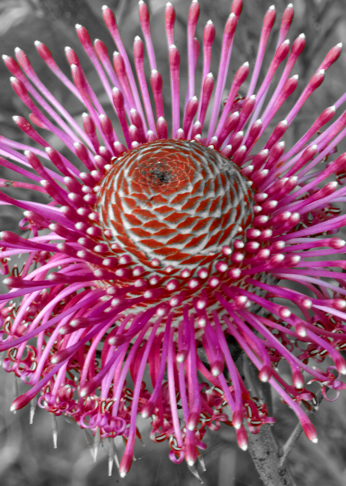 Purple Burst Photography Art | FocusPro Services, Inc.