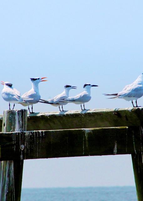 Gulls in Bay St Louis