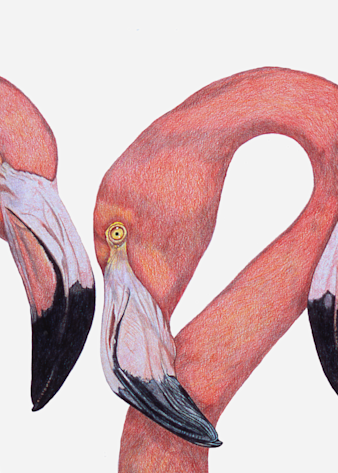 """Flamingo Talk"" Fine Art Giclee Print by Dee Van Houten"