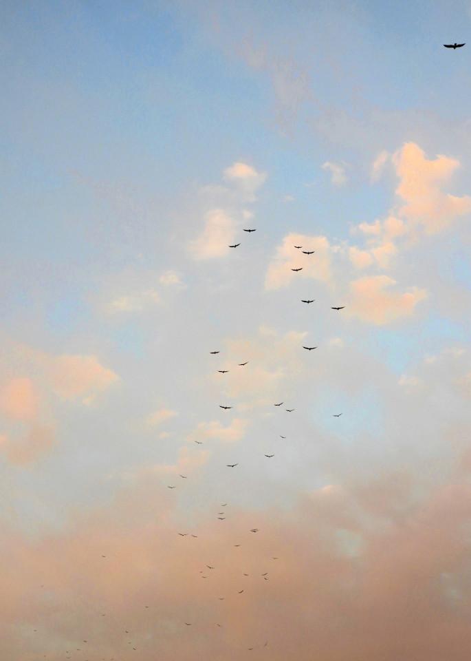 Kettle Of Vultures Photography Art | Galeria Mañana