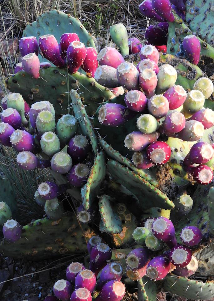 Tunas Tri Colores (Cactus Fruits) Photography Art | Galeria Mañana