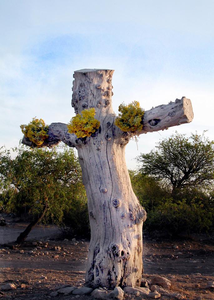 Tree Cross (Cruz Arbol) Photography Art | Galeria Mañana