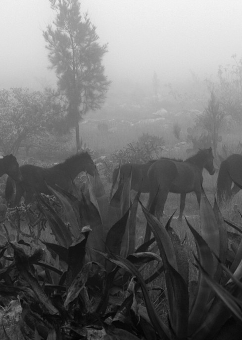 Horses In The Fog (Caballos En La Neblina) Photography Art | Galeria Mañana