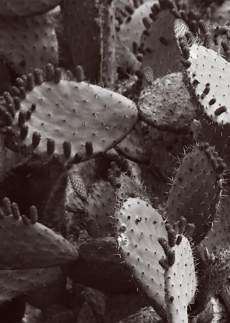 Nopal Cluster Photography Art | Galeria Mañana