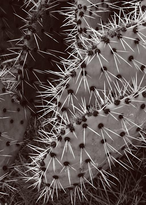Spiny Nopal Photography Art | Galeria Mañana