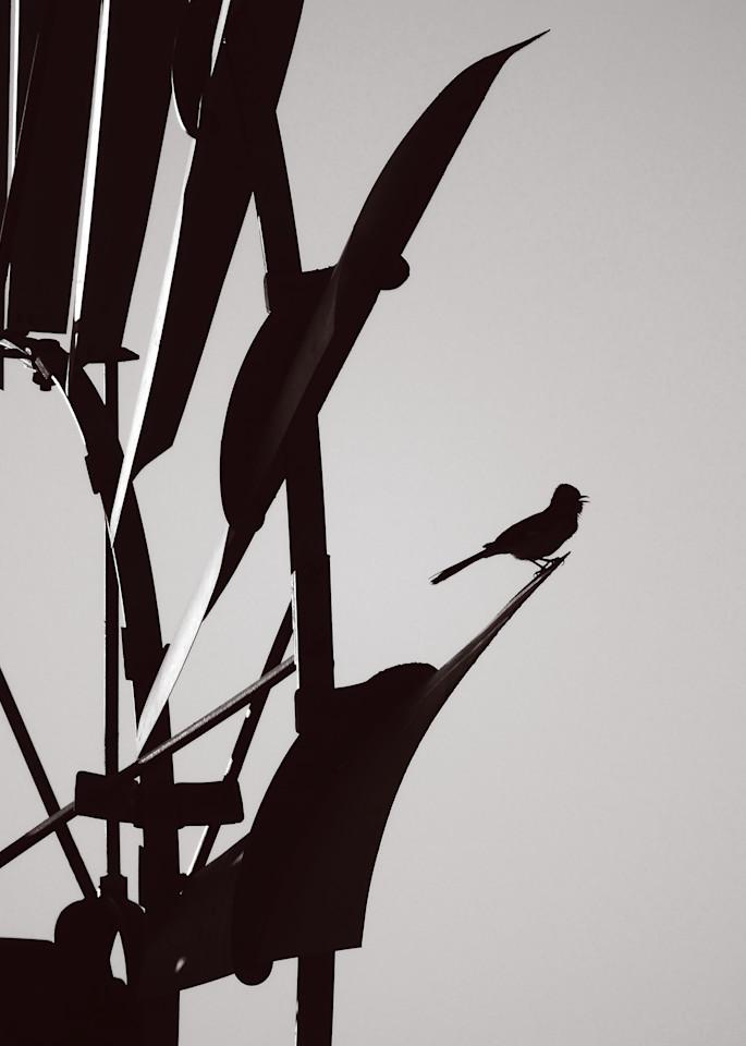 Bird On The Windmill Photography Art | Galeria Mañana