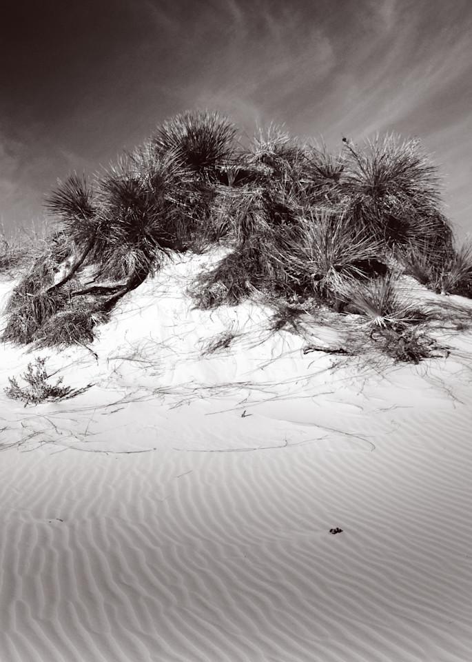 Palms & Sand Photography Art | Galeria Mañana