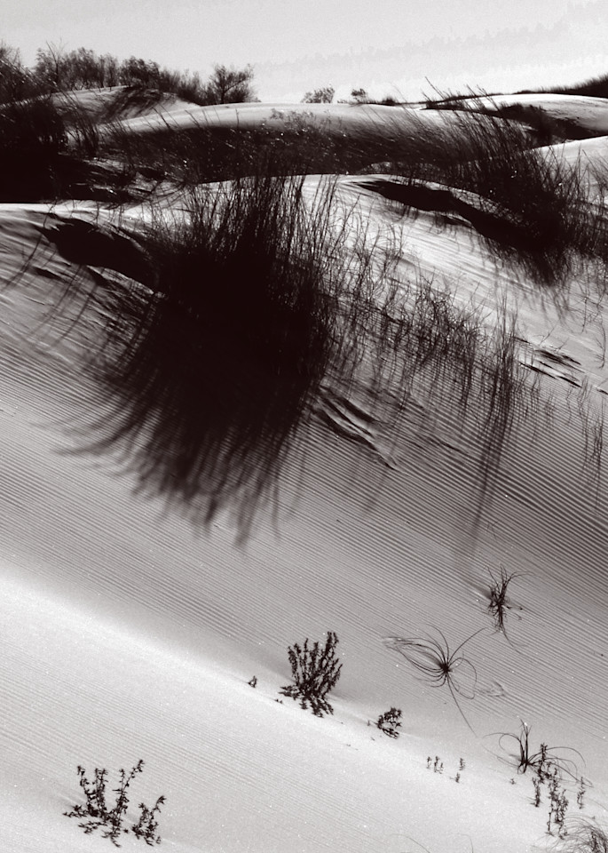 Verdant Sand Photography Art | Galeria Mañana