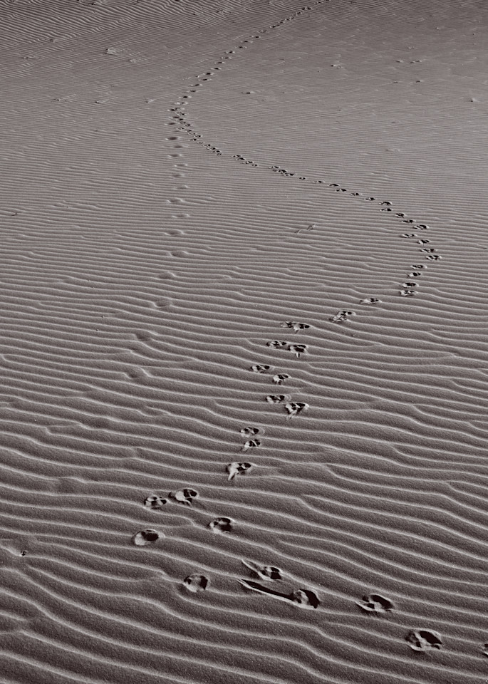 Sandy Tracks #1 Photography Art | Galeria Mañana