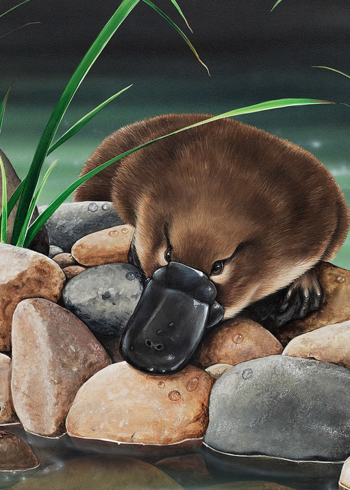 River Companions - Platypus and Eastern Dwarf Tree Frog | Australian Native Wildlife Painting