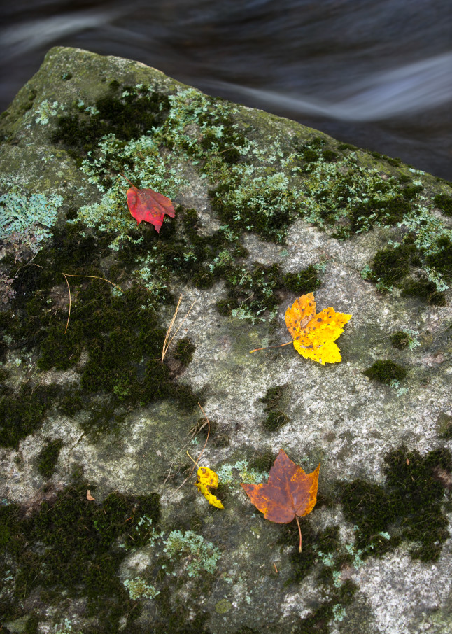 colored leaves, moss and flowing water