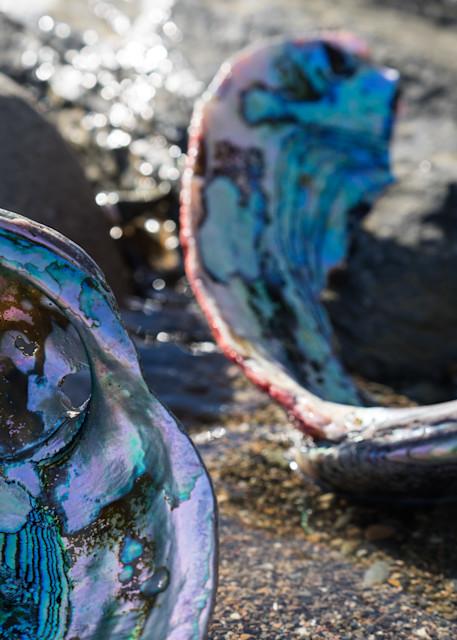 Abalone Shells - California coast landscape photograph print