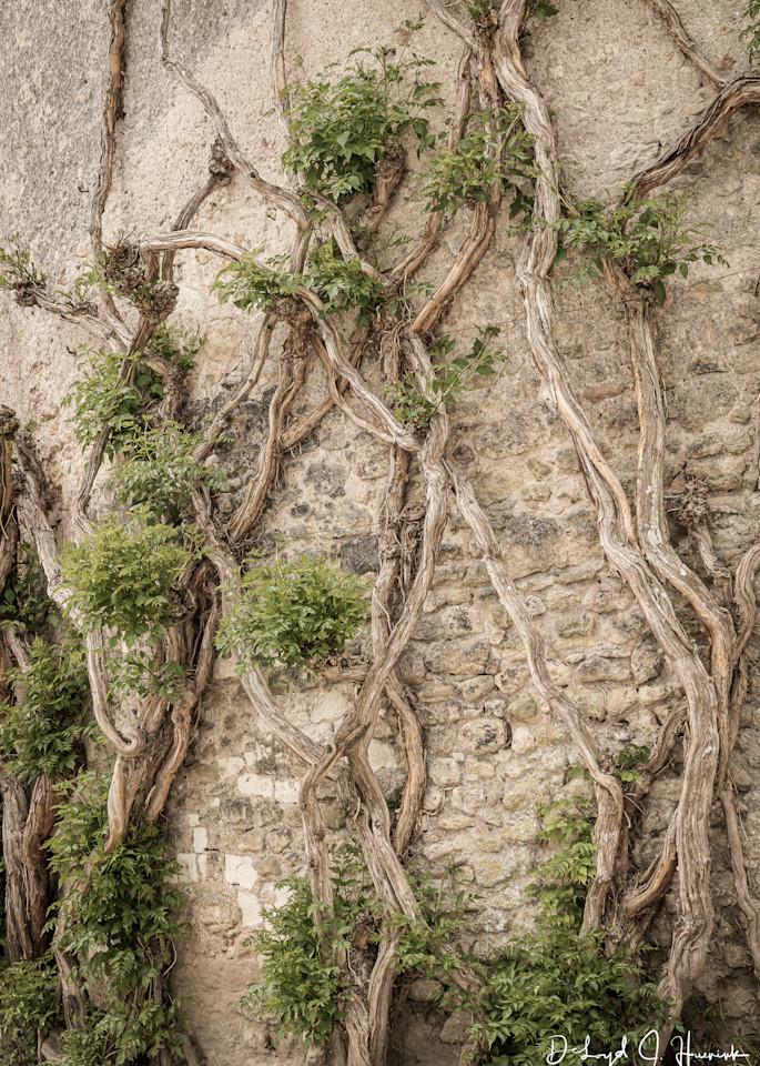 """""""Climbing On A Castle Wall"""", PhotoDiscoveries,"""