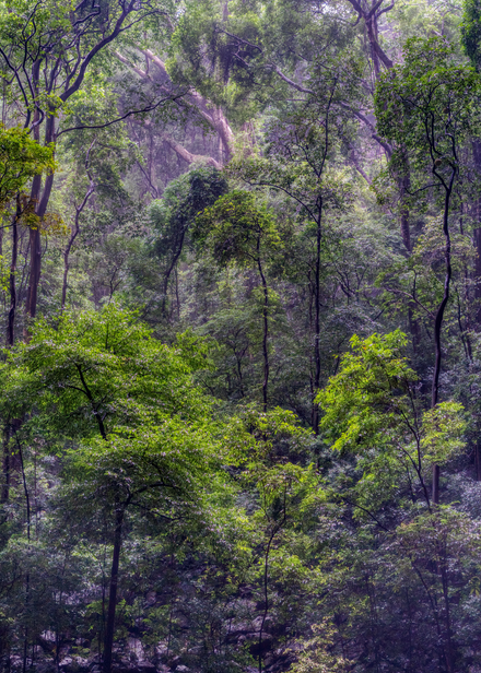 Rainforest, Ankarana National Park