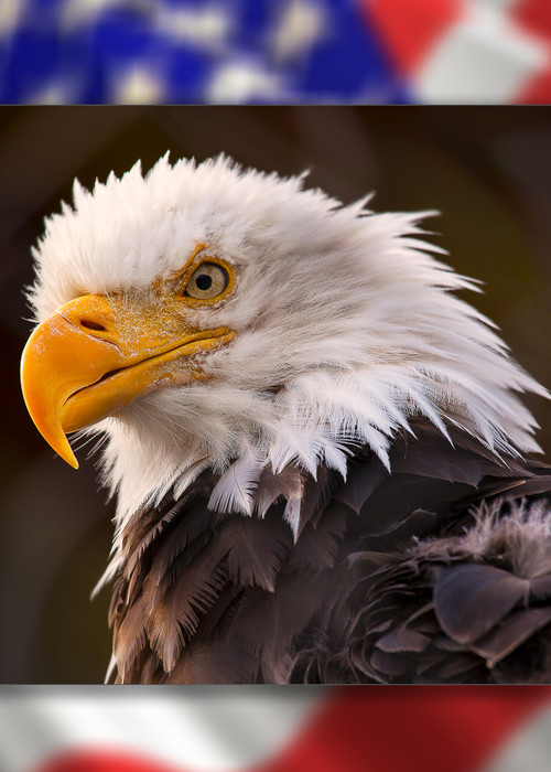 Eagle 3 D Photography Art | Whispering Impressions