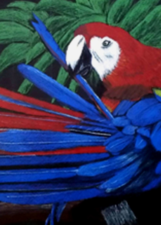 Blue Parrot, From an Original Colored Pencil Painting