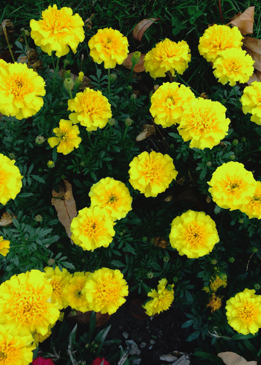 Fall Photo Flower Display in Yellow