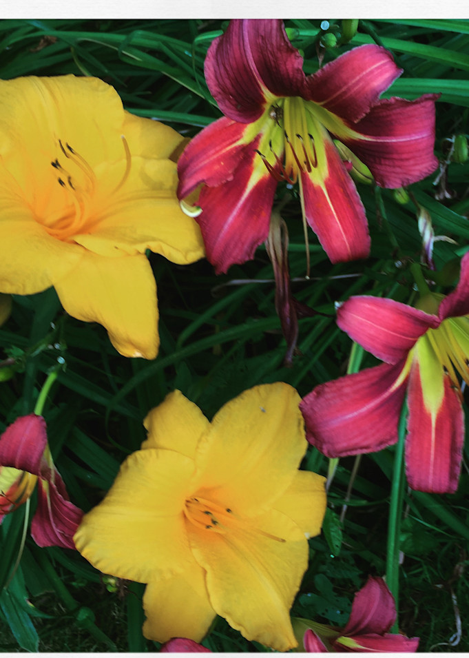 Lilies Mix Instagram Print by George Delany