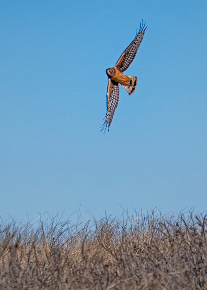 South Beach Red Tail Art | Michael Blanchard Inspirational Photography - Crossroads Gallery