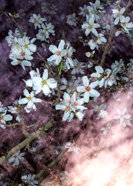 Almond Blossom Galaxy Photography Art | Josh Kimball Photography
