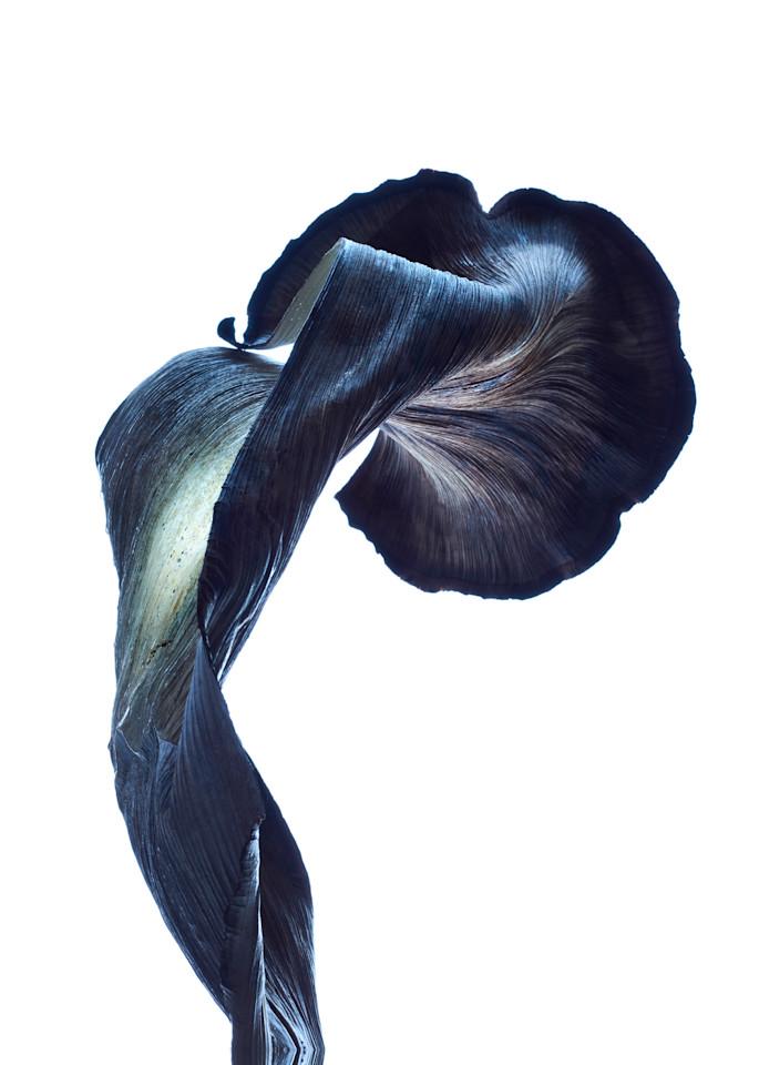 William Couture Nebula Cv2 Photography Art | William Couture