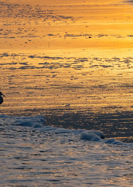 Sandpiper, sunset, and beach - shop fine art prints | Closer Views