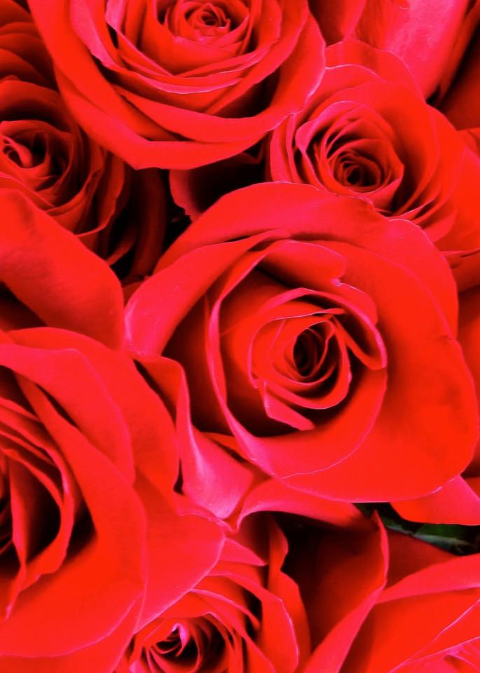 Blood Rose  Art   JackieRobbinsStudio