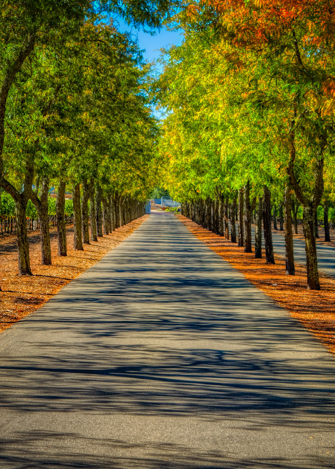 Napa W Inery Road Photography Art | FocusPro Services, Inc.