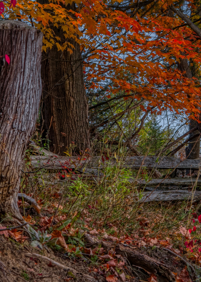 Rural Idyll Photography Art | FocusPro Services, Inc.