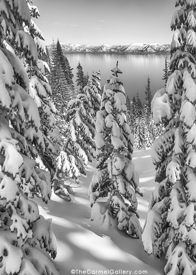 Lake Tahoe winter black and white, snowy trees and lake