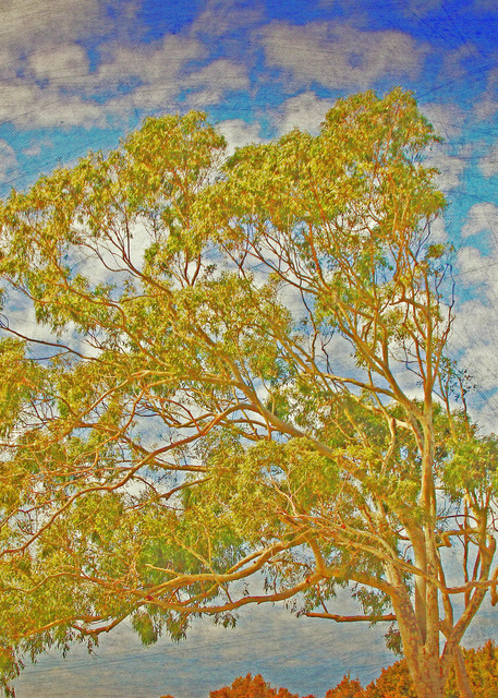 Tree Of Life Backdrop Ii  Art   JackieRobbinsStudio