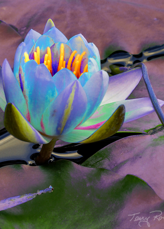 Lily Pad Funky 2, an Abstract by Terry Rosiak