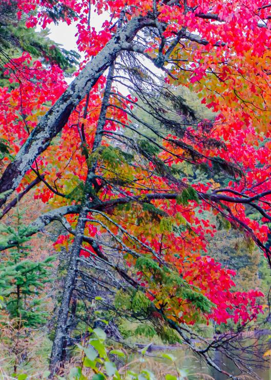 Algonquin Colours Photography Art | Robert Leaper Photography