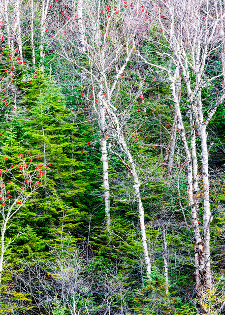 Lake Superior Forest Photography Art   Robert Leaper Photography