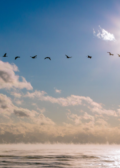 Morning Flight Photography Art | Robert Leaper Photography
