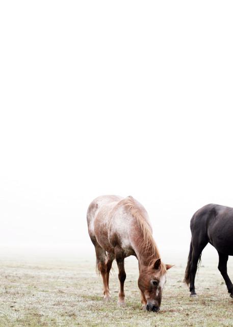 Morning Graze Photography Art | Belathée Fine Arts by Belathée Photography