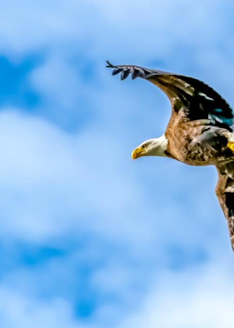 Eagle 2117 Photography Art | jimhooverphoto